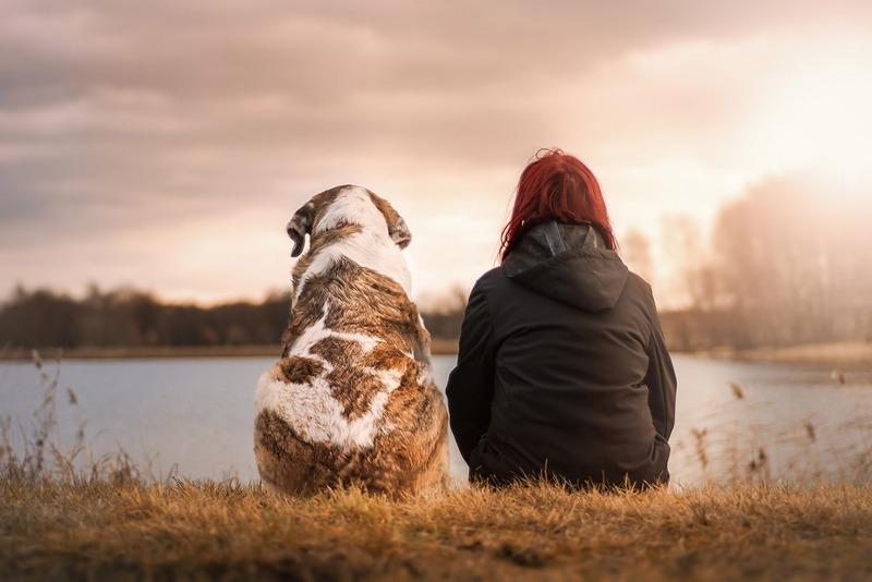 Pet-therapy-ansia-depressione_800x534