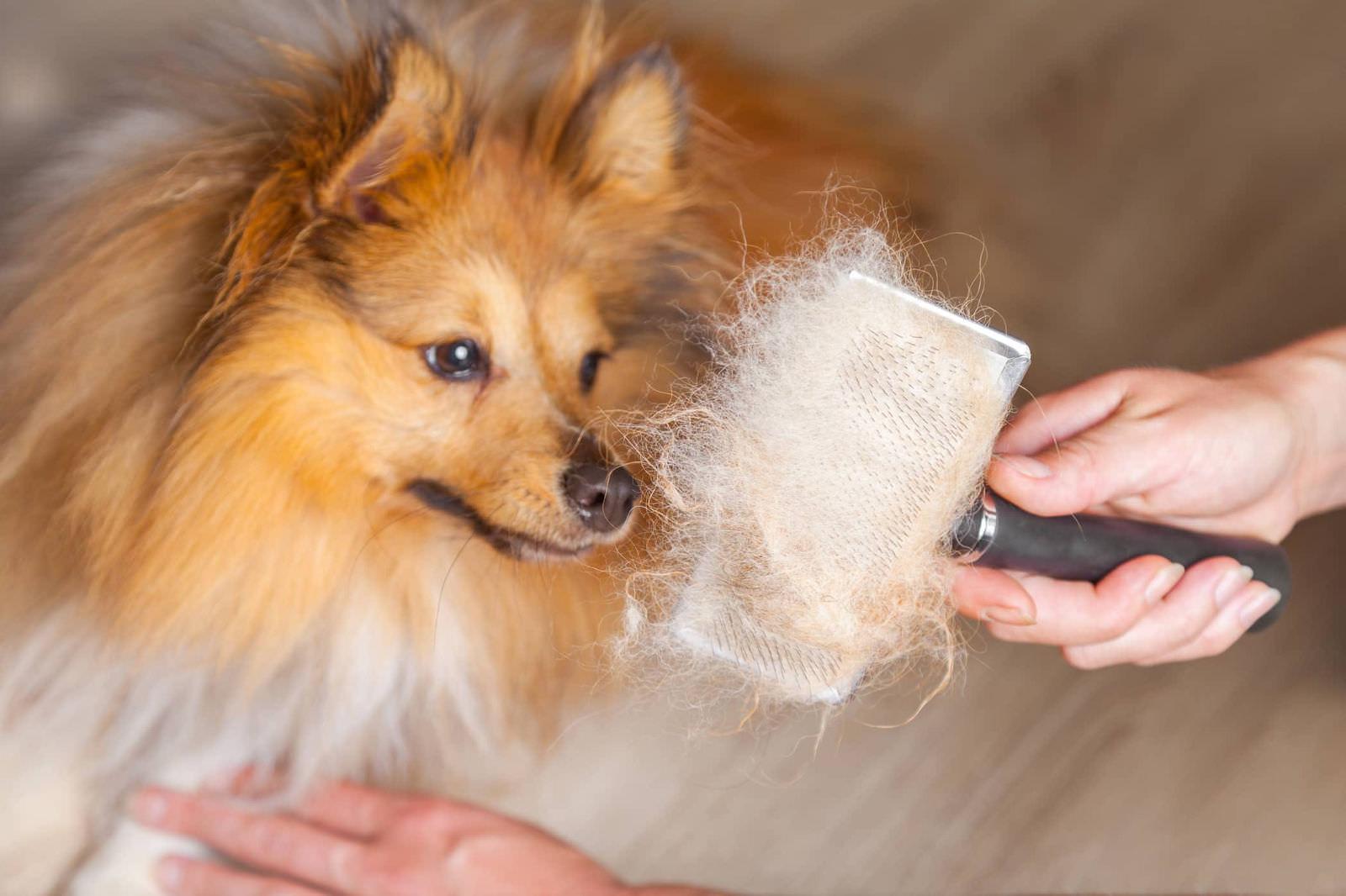 Gestire la pesante perdita e le nuvole di peli dei cani